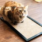 Arranhadores para Gatos - Bichinho Virtual