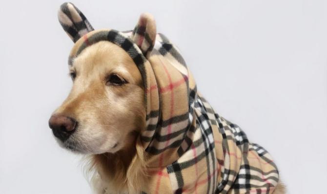 moletom-para-cachorro-dez-opções